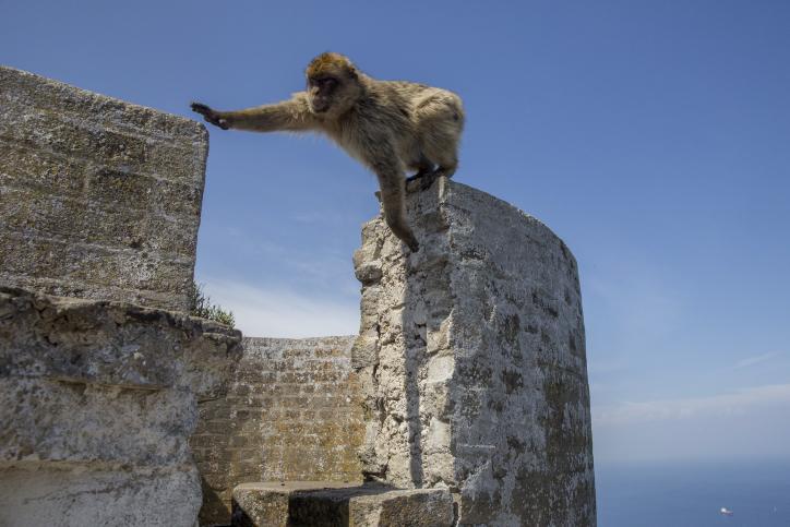 חופים, נופים וקופים: גיברלטר בעין המצלמה