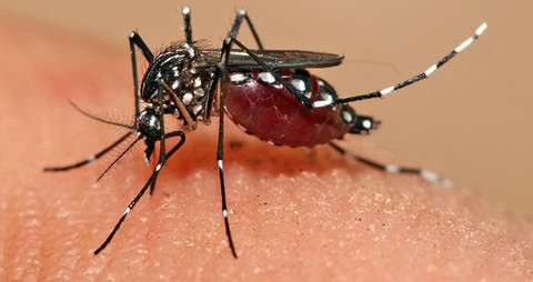 Zika virus spreads