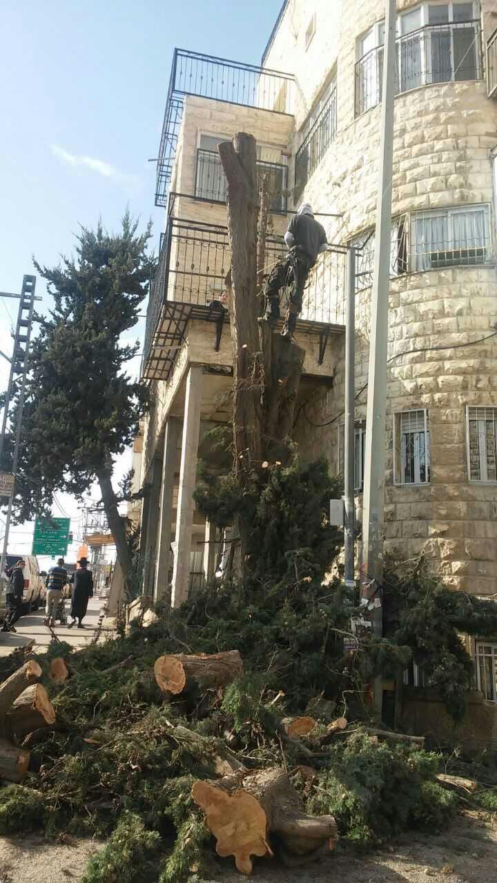 וידאו: חותכים את העץ לקראת ההפגנה