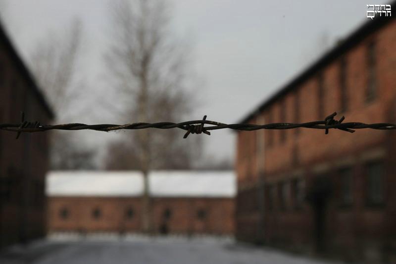 השואה בתמונות: גלריית זיכרון • לא נשכח ולא נסלח