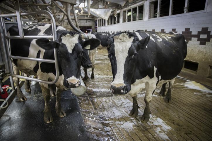 הציבור צורך יותר חלב - ומשרד החקלאות מגדיל את המכסות ל-2018