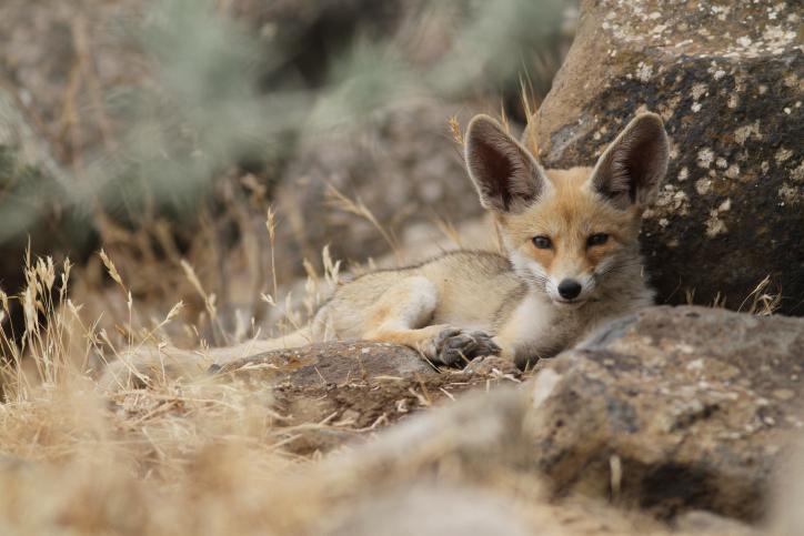 מהמצפה עד הגולן: בעלי החיים בארץ ישראל