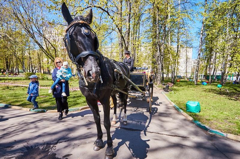 """תיעוד ססגוני: כרכרה וסוס של רשב""""י ברחובות מוסקבה"""