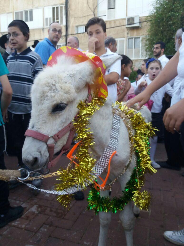 צפו בתיעוד חגיגי: החמור של הוד השרון