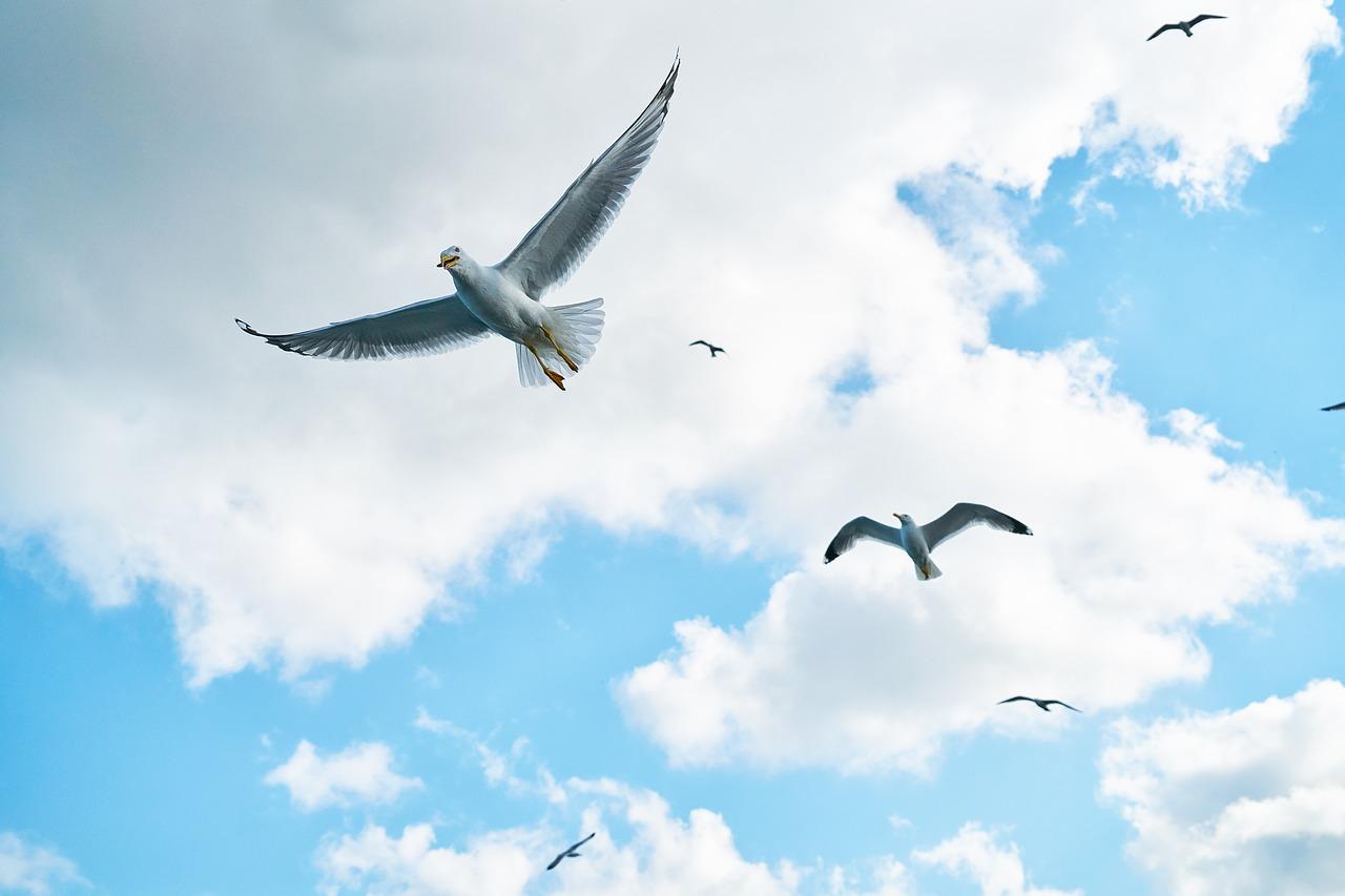 חוי לידר נותנת לכם כנפיים: זכות בחירה - הרשות  לשנות