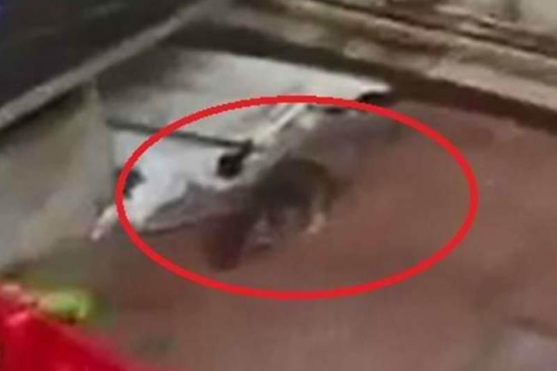 עכברים בארגזי הלחם בבני ברק • צפו בתיעוד