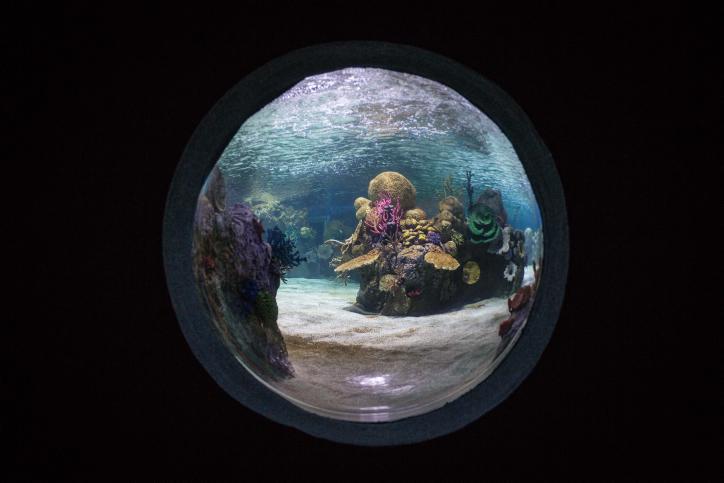 העולם הכחול המופלא: צפו בגלריה תת מימית מרהיבה מירושלים