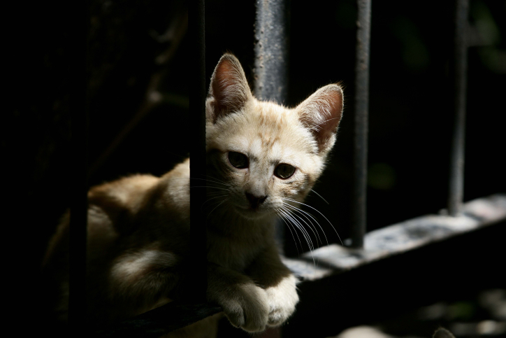 יללת החתול: פוליטיקאים חרדים נגד ההלכה