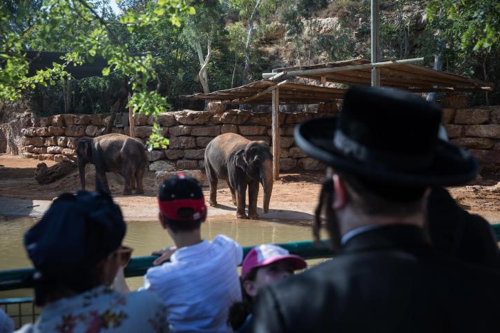 בין הזמנים: החרדים יצאו לטייל בגן החיות