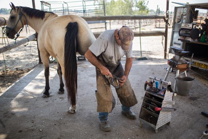 כך מייצרים את פרסת הסוסים ברמת הגולן • גלריה