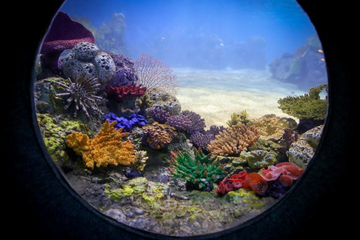 עולם הדממה: סיור מצולם מתחת למים