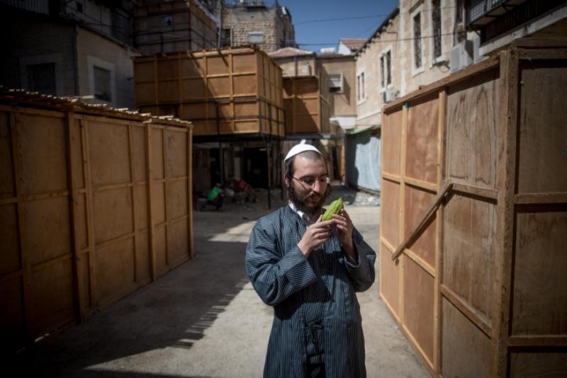 סוכות, סכך ו-4 מינים: ירושלים מתכוננת לחג