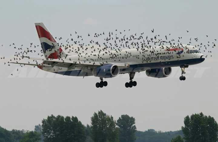 באמצע הטיסה: 85 אינסטלטורים ניסו לתקן נזילה בשירותים - ולא הצליחו