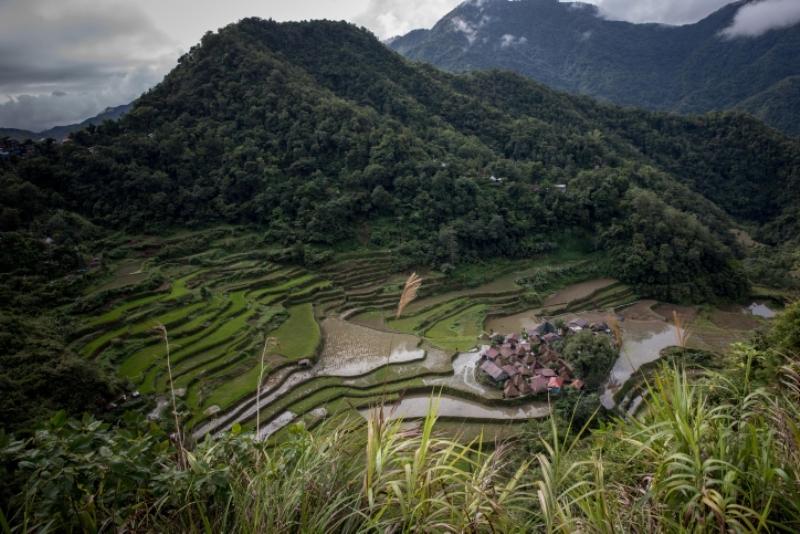 מפלאי עולם: שדות האורז בפליפינים • צפו