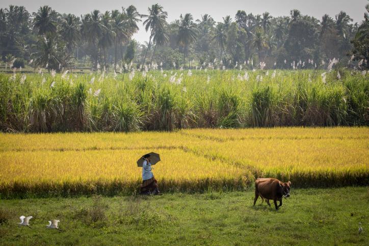 המסע להודו יוצא לדרך: פותחים במייסור • צפו
