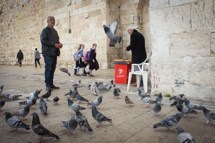 ערב שבת שירה: אוכל לציפורים מותר או אסור