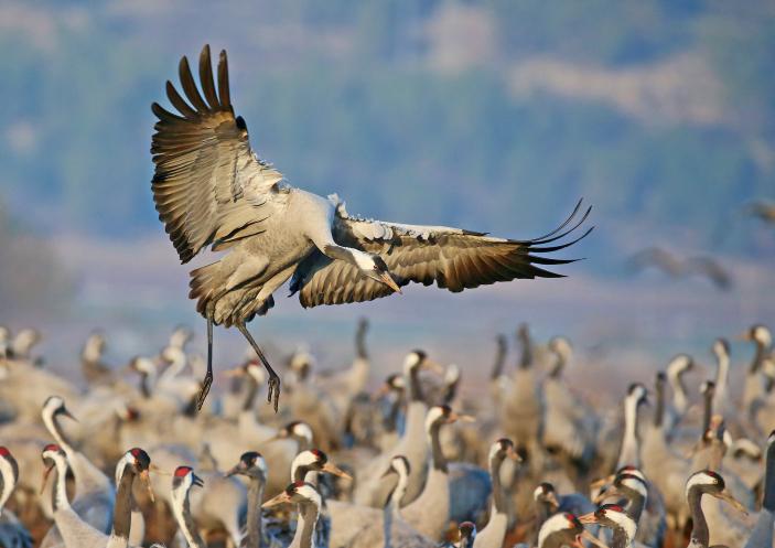 מרהיב: עשרות סוגי ציפורים בשמי ישראל • צפו