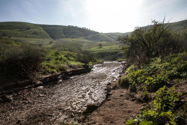 הרים ונחלים, פרות ונופים: סיור מצולם בנחל תבור