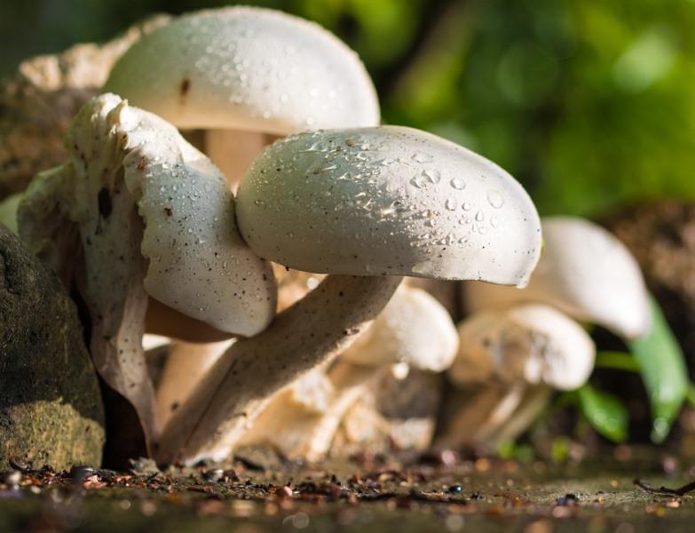"""סערת הפטריות: """"בסוף לא קטפנו, כי לא היו"""""""