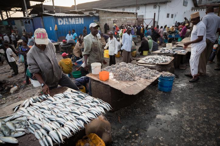 כך נראית תעשיית הדיג בבירת זנזיבר • צפו
