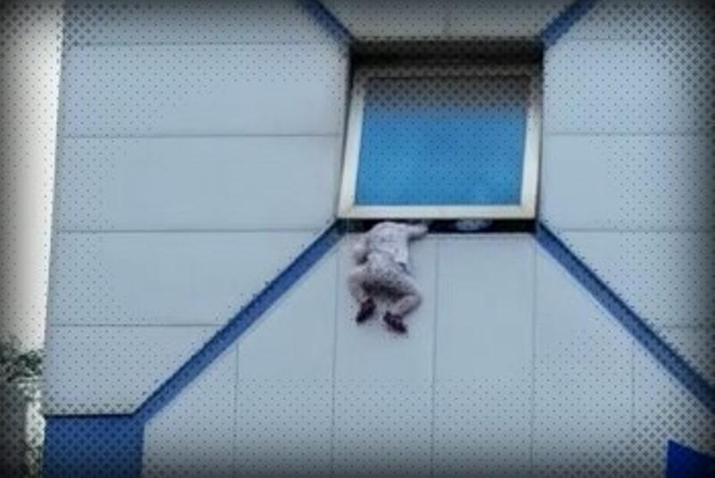צפו: פעוטה נתלית בחלון בגובה 10 מטר