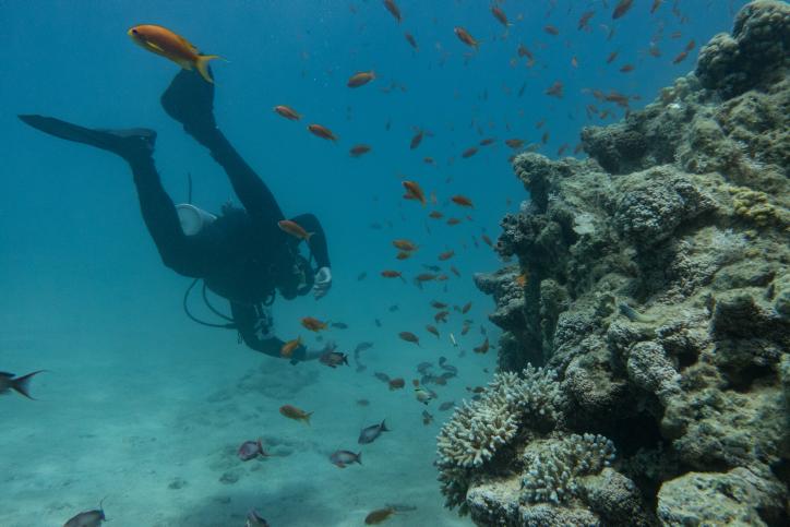 עולם הדממה: זה מה שתראו מתחת למים • צפו