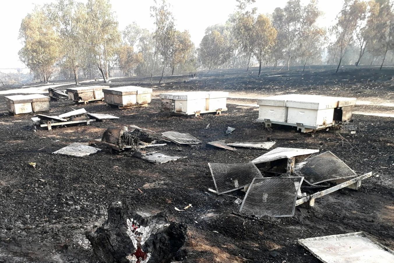 מעל 100 כוורות דבורים נשרפו בעוטף עזה