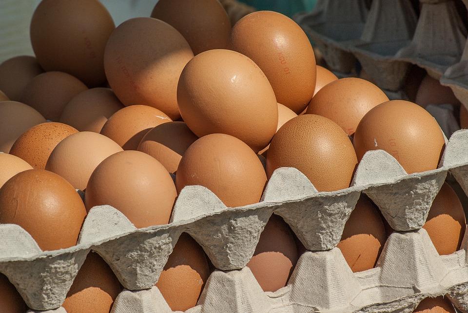 הזוכים המאושרים שיספקו 144 אלף ביצים ביום לצה