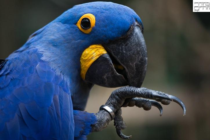 גן החיות הברזילאי מבעד לעדשה