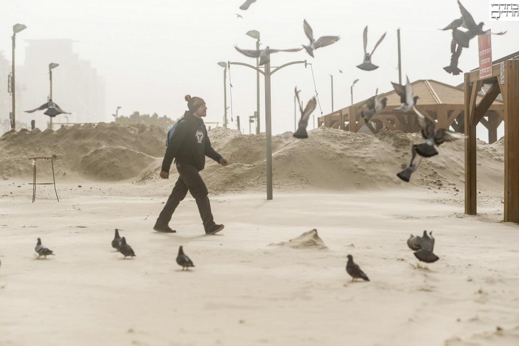 ביצורי חול בחוף תל אביב • גלריה אביכה
