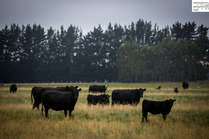 מדינה קסומה: צפו בדרום ניו זילנד