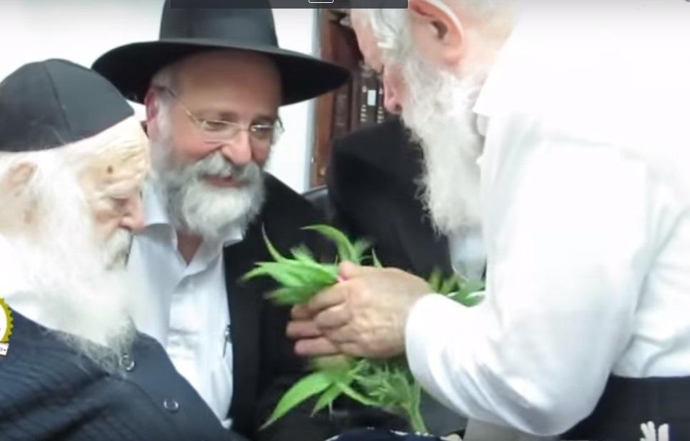 הרב קנייבסקי הריח ופסק: קנאביס כשר לפסח