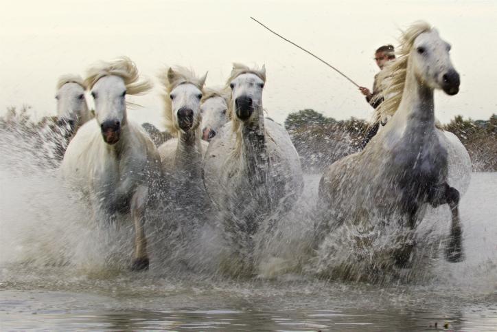 מרהיב: דהירת סוסי הפרא של קאמארג