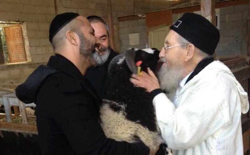 80 'כבשי יעקב אבינו' הגיעו ארצה; המקובל ערך מי שברך לכבשים