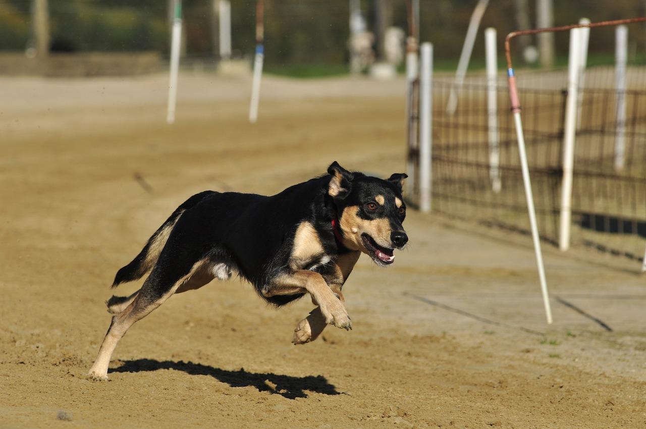 חרדית רדפה אחרי כלב ונפצעה אנושות בתאונה