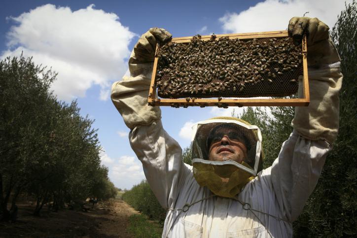 """הכל דבש: הדבוראים מכפר חב""""ד בפעולה"""