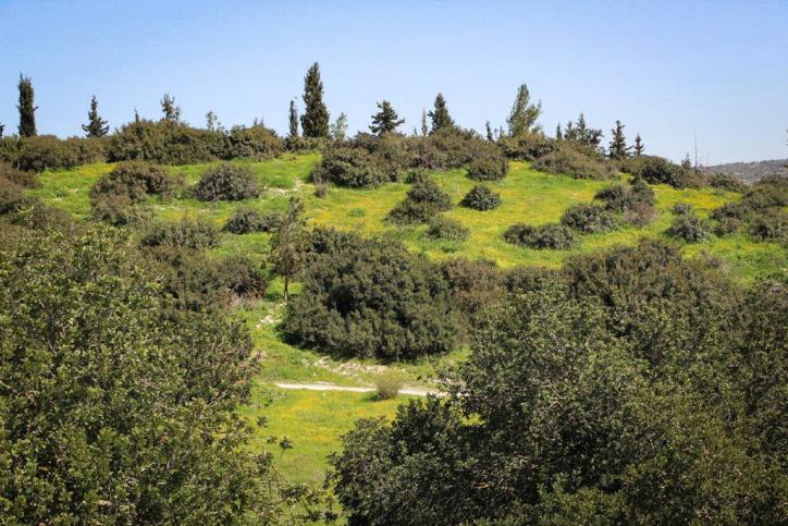 האביב עוד רגע: סיור מצולם בעמק האלה