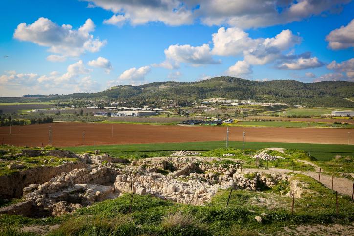 אביב הגיע: ארץ ישראל פורחת בגלריה מרהיבה