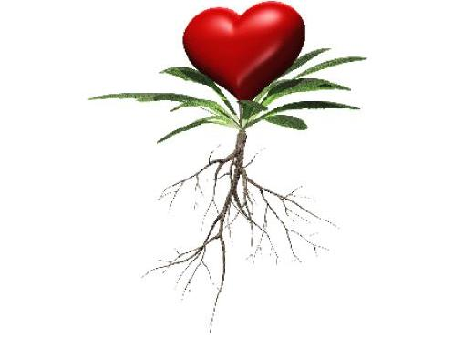 הקשר בין הלב לצמחי מרפא ותרופות סבתא