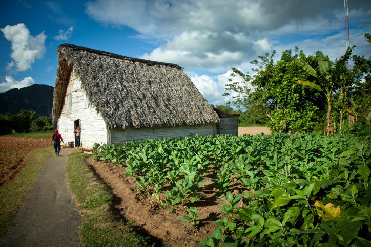 קפואה בזמן: הכירו את הוואנה בירת קובה