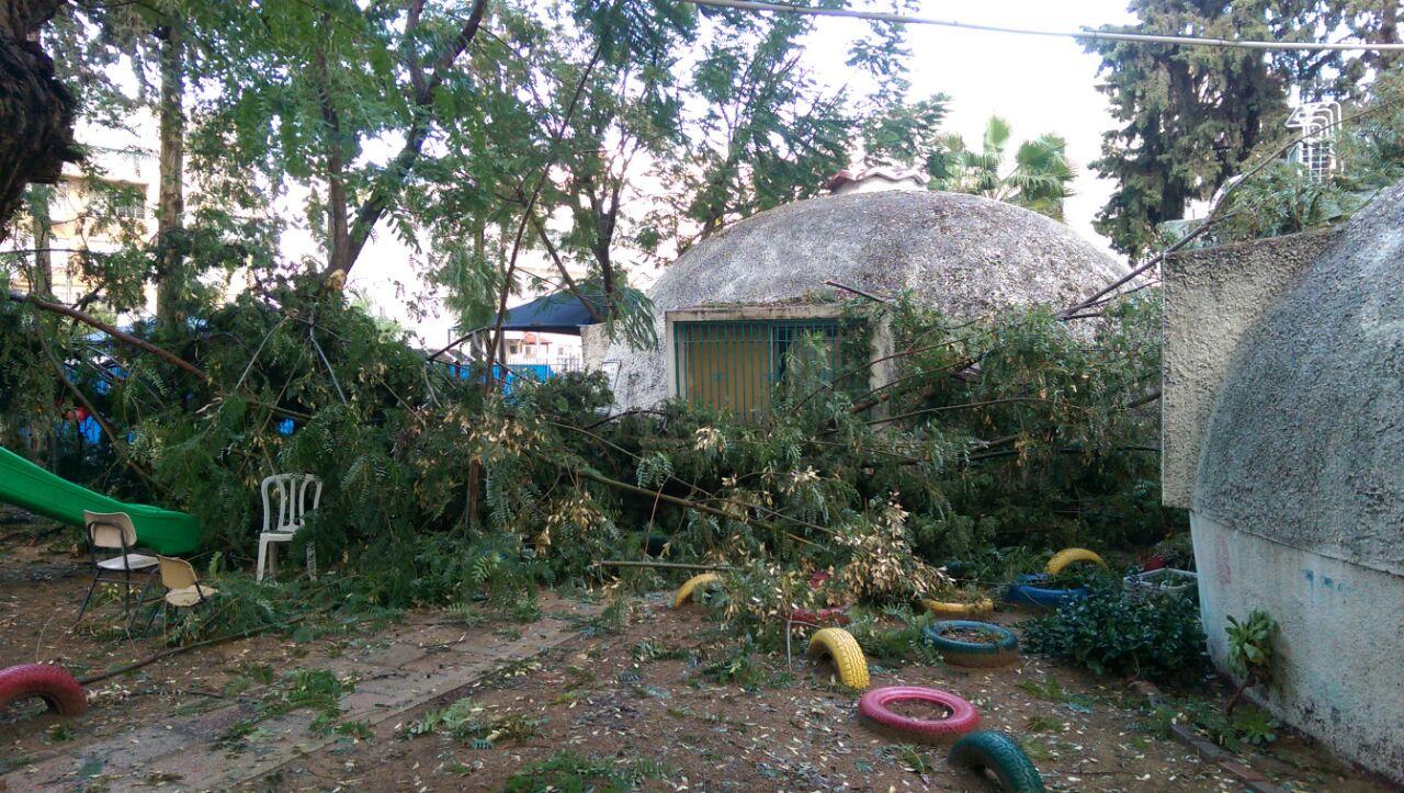 נס בגן הילדים: עץ קרס על מתקני השעשועים